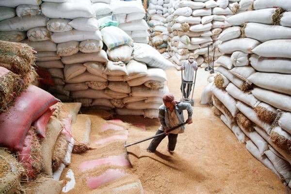 Lượng gạo xuất khẩu của Campuchia tăng